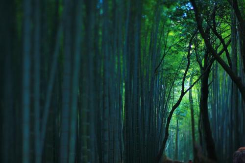 bamboo via darjeeling tumblr